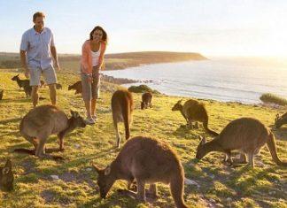 Kangaroo o uc